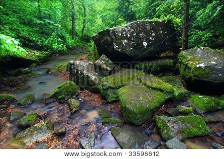 Escena tranquila Creek en Alabama