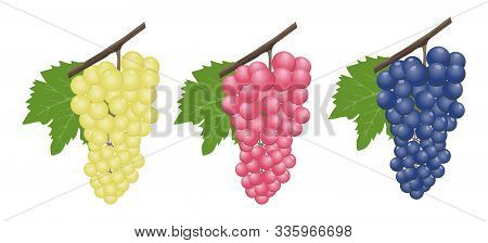 Grapes Realistic Composition With Red Rose And White Grapes Isolated. Red And White Table Grapes, Wi