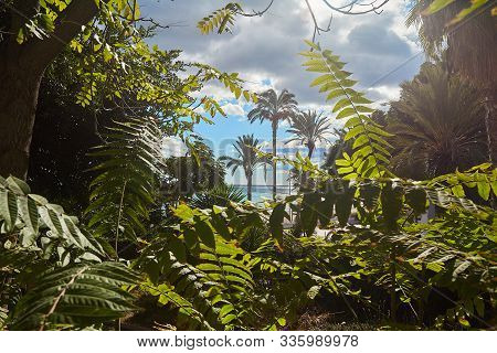 Tropical Greens. Fan Leaves Of Palm Trees Of Tropical Thickets. Green Leaf. The Leaf Of A Tropical P