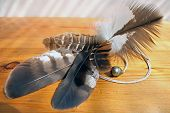 a group of feathers from various raptors. poster