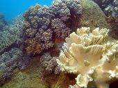 Exotic pictures of the nature of Vietnam, area of the city of Nha Trang: soft coral poster