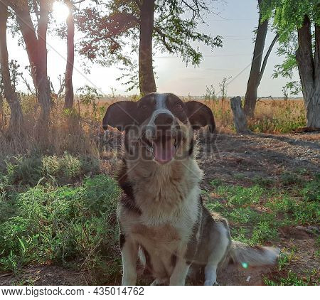 Happy Dog Looks At The Camera. A Dog Poses For The Camera With A Happy View On The Street. The Frien