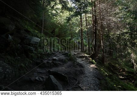 Picturesque View Of Pathway In Beautiful Coniferous Forest