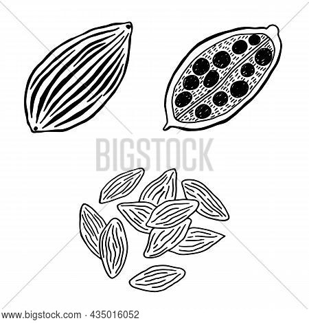 Cardamom - Flavoring Line Illustration. Black And White Doodle Sketch. Freehand Drawing Of Flavor He