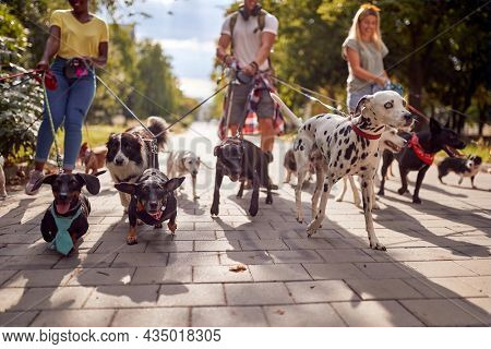 Group of dog walkers working together outside with dogs