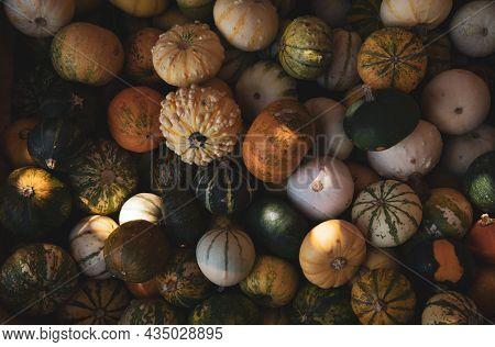 Basket Full Of Small Pumpkins At The Greek Garden Shop In October.