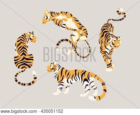 Collection Of Wild Oriental Tigers In Different Poses. Large Striped Cats For Traditional Festival,