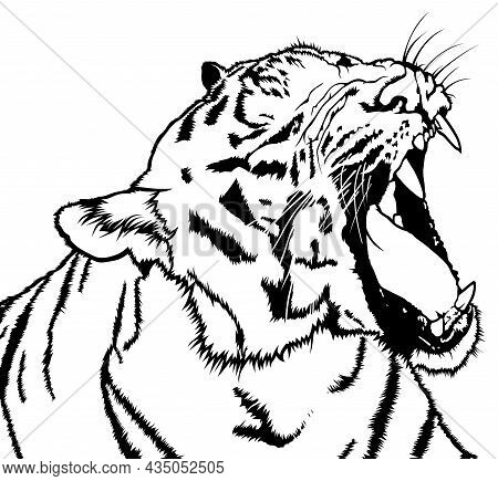 Drawing Of Roaring Tiger - Black Illustration Isolated On White Background, Vector