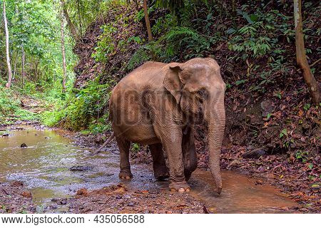 Asia Elephant Family Live In The Elephant Camp In Chiang Mai