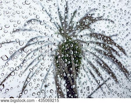 Palm Tree Through Raindrops On Window Pane, Orlando, Florida