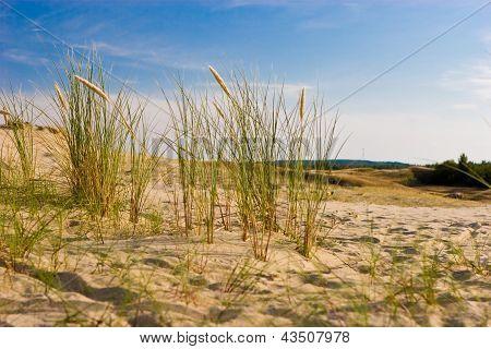 Nagliai Dune In Neringa, Lithuania