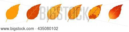 Withered Autumn Motley Leaves. Fallen Leaves With Variegated Texture