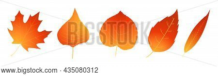 Red And Red Colored Autumn Leaf. Motley Fire-colored Leaf Icon.