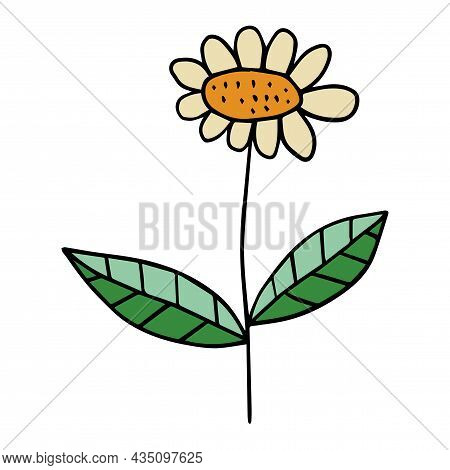 Cute Cartoon Doodle Daisy Flower With Leaves Isolated On White Background. Chamomile Floral Element.