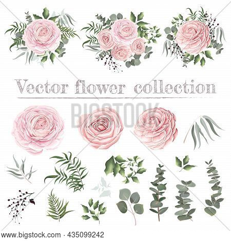 Vector Set Of Pink Roses And Plants. Compositions Of Plants. Plants And Flowers Isolated On A White