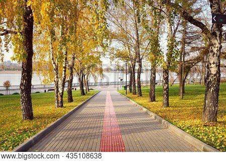 Alley On The Ob River Embankment. Birch Trunks With Autumn Foliage Along The Pedestrian Path Leading