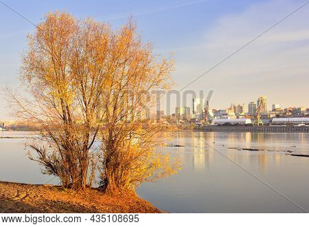 Autumn Tree On The Bank Of The Ob River. River Port Of The Capital Of Siberia In The Distance Under
