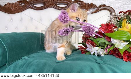 Little Red Ginger Striped Kitten Sniffing Bouquet Of Red Flowers On Green Cat Bed In Bedroom. Britis