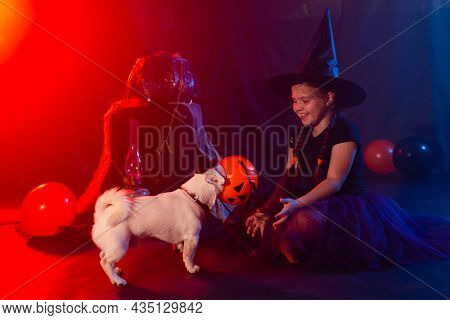 Funny Girl Child Kid In Halloween Costume Witch Playing With Spooky Jack Pumpkins Fog And Jack Russe