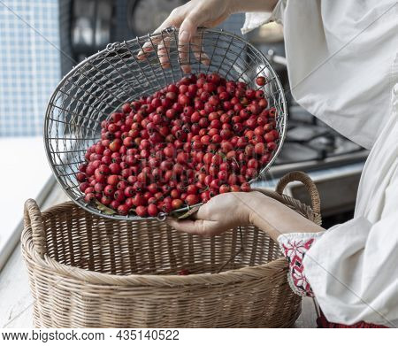 A Girl In Ethnic Clothes Pours Hawthorn Berries Into A Basket. The Woman Picks Out The Red Berries.