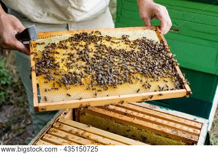 Partial View Of Bee Master With Scraper Holding Blurred Honeycomb Frame Near Beehive