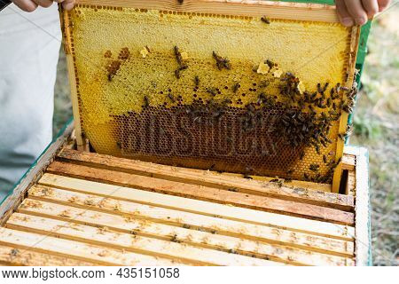 Partial View Of Beekeeper Inspecting Honeycomb With Bees On Apiary
