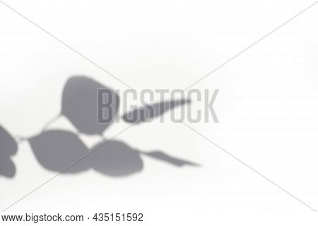 Trending Concept In Natural Materials With Eucalyptus Leaves Shadows On White Background. Presentati