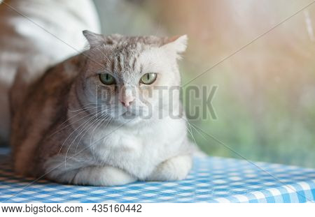 Cute Kitty Cat Relaxing At Home.  Pet At Home
