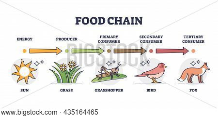 Food Chain And Animal Classification By Eating Type Outline Diagram. Labeled Educational Mammals, Pl