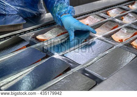 The Worker Places The Pieces And Wedges Of Salmon By Hand In The Conveyor In The Trays For Vacuum Pa
