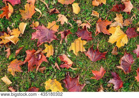 Beautiful Background Of Fallen Leaves.