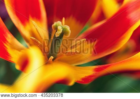 Creative Style- Blurred Tulip. Spring Background