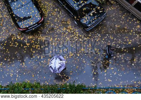 People Walking On Wet Asphalt Strewn With Yellow Leaves In The Rain, Top View.