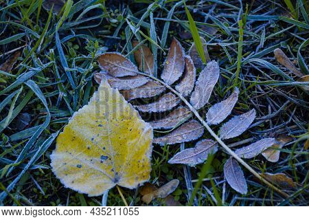 Frozen Grass And Leaves. Frost, Frost On The Grass And Ground. Background With The First Autumn Fros