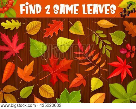 Kids Maze Game, Find Two Same Autumnal Leaves, Vector Tabletop Riddle. Find And Match Correct Autumn