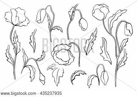 Set Of Peony Flowers, Leaves, Leaf, Buds Hand Drawn Vector Sketch. Hand Drawn Ink Poppies Outline Dr