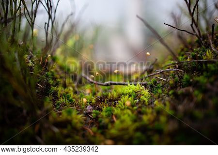 Beautiful Macro Tiny Plants And Moss With Water Droplets On Them | Dew Drops On The Lush Green Moss