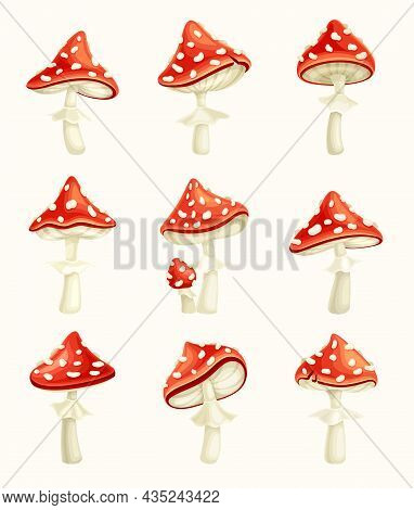 Fly Agaric Poisonous Mushrooms Set . Amanita Toadstools With Red Spotted Cap Cartoon Vector Illustra