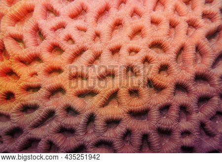 Abstract Background In Trendy Coral Color - Organic Texture Of The Hard Honeycomb Coral
