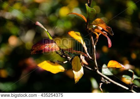 Surface Texture Of Yellow, Red And Burgundy Leaves On Green, Orange Blurred Background With Bokeh. A