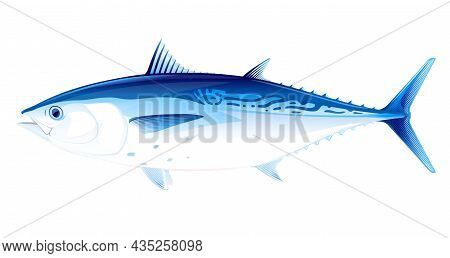 Little Tunny Fish In Side View Illustration