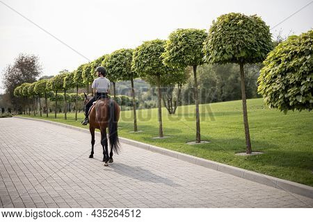 Back View Of Female Horseman Riding Brown Thoroughbred Horse On Pavement Near Green Garden In Countr