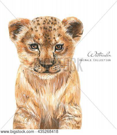 Watercolor Baby Lion. Cute Animal Cub Illustration