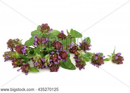 Self heal herb with flowers used in natural herbal medicine to treat diarrhea, colic, upset stomach, gastroenteritis, Crohns disease, herpes and osteoarthritis. Anti inflammatory and painkiller.