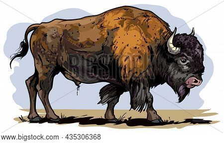 Vector Cartoon Style Illustration Of An American Bison, Plains Bison, An American Buffalo.