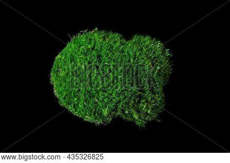 Moss Dicranum Scoparium On A Black Background. Dicranum Scoparium, The Broom Forkmoss, Is A Species