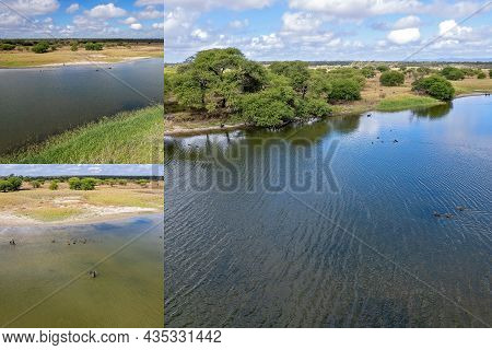 Aerial Views Of Swans And Cygnets Swimming On A Wetlands Reserve