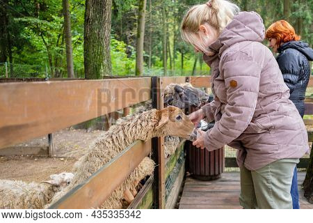 Moscow. Russia. September 25, 2021. Visitors To The Petting Zoo Feed The Sheep With Carrots. Close C