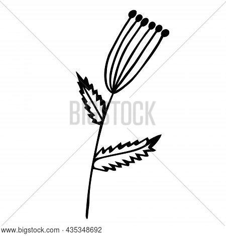 Herb With Umbrella Inflorescence Vector Icon. Hand-drawn Doodle. A Branch With Round Seeds, Veined L