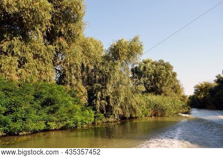 In The Danube Delta, Through The Labyrinth Of The Danube Canals, On The Dunavăț Canal, Where Willows
